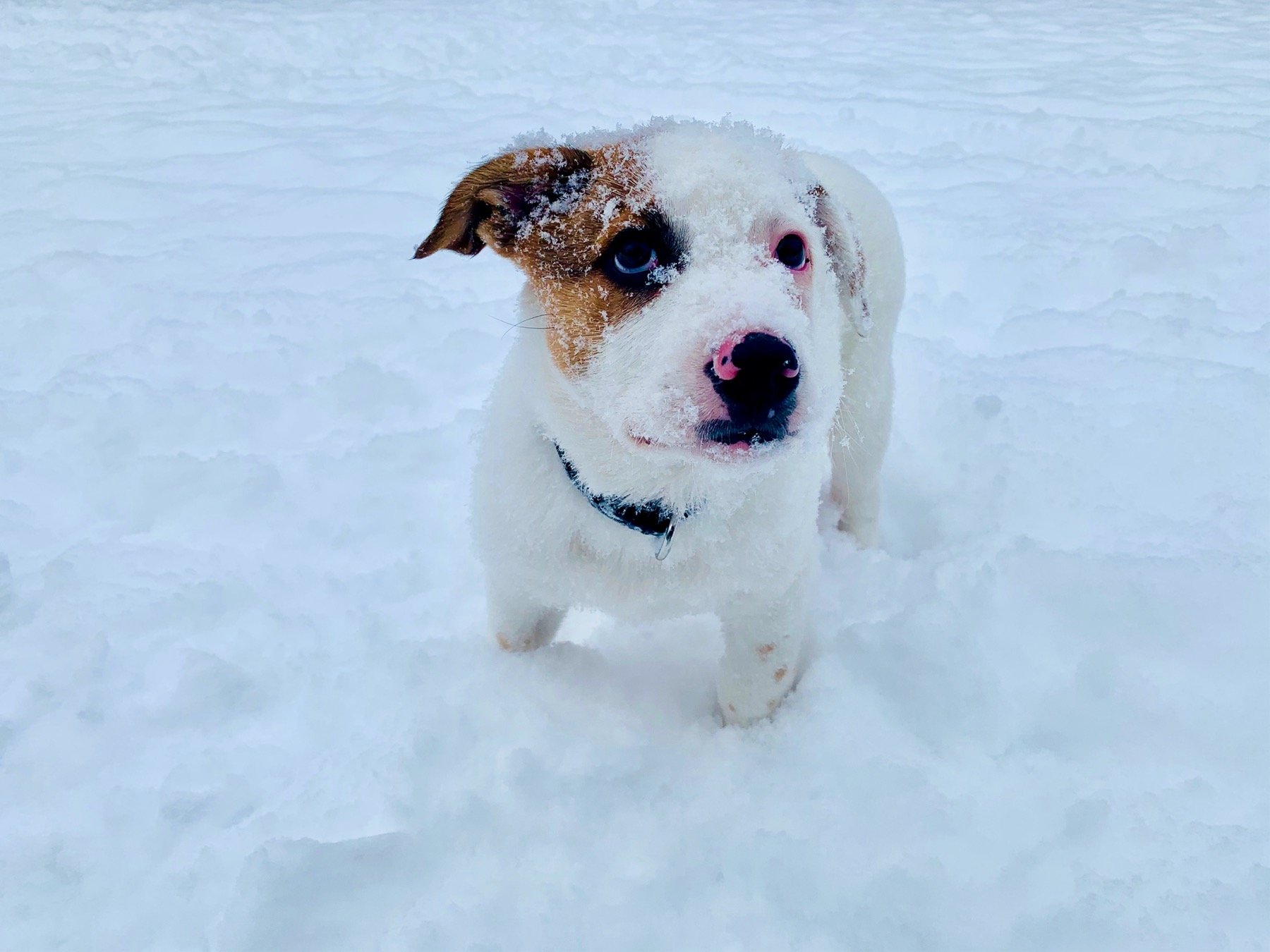 Billy in the Snow